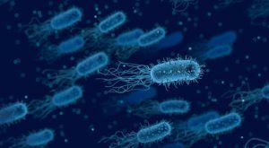 Un réseau IoT reposant sur des bactéries
