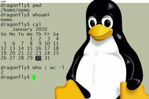 Introduction à la ligne de commande Linux
